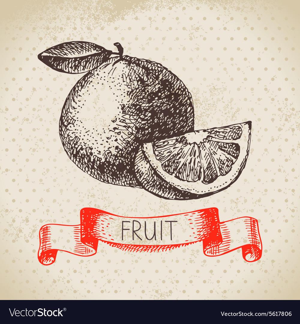 Hand drawn sketch fruit orange Eco food vector image