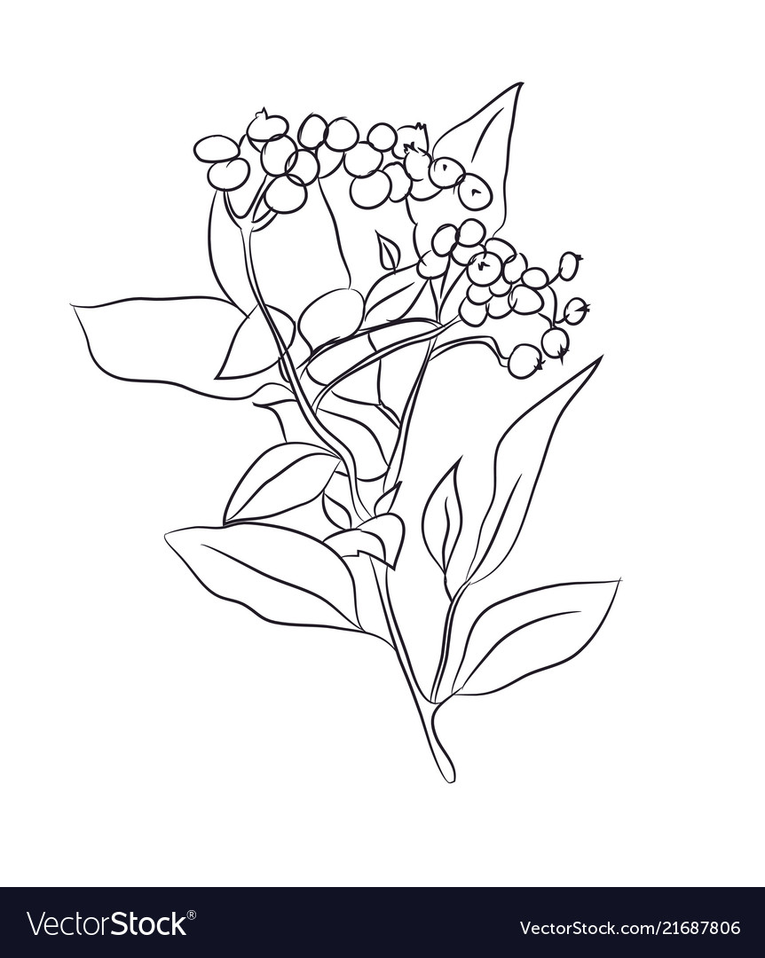 Plant drawn in lines