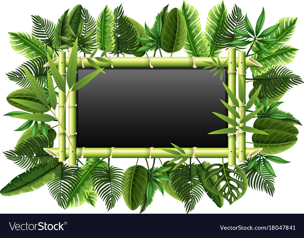 Blackboard with bamboo and green leaves vector image