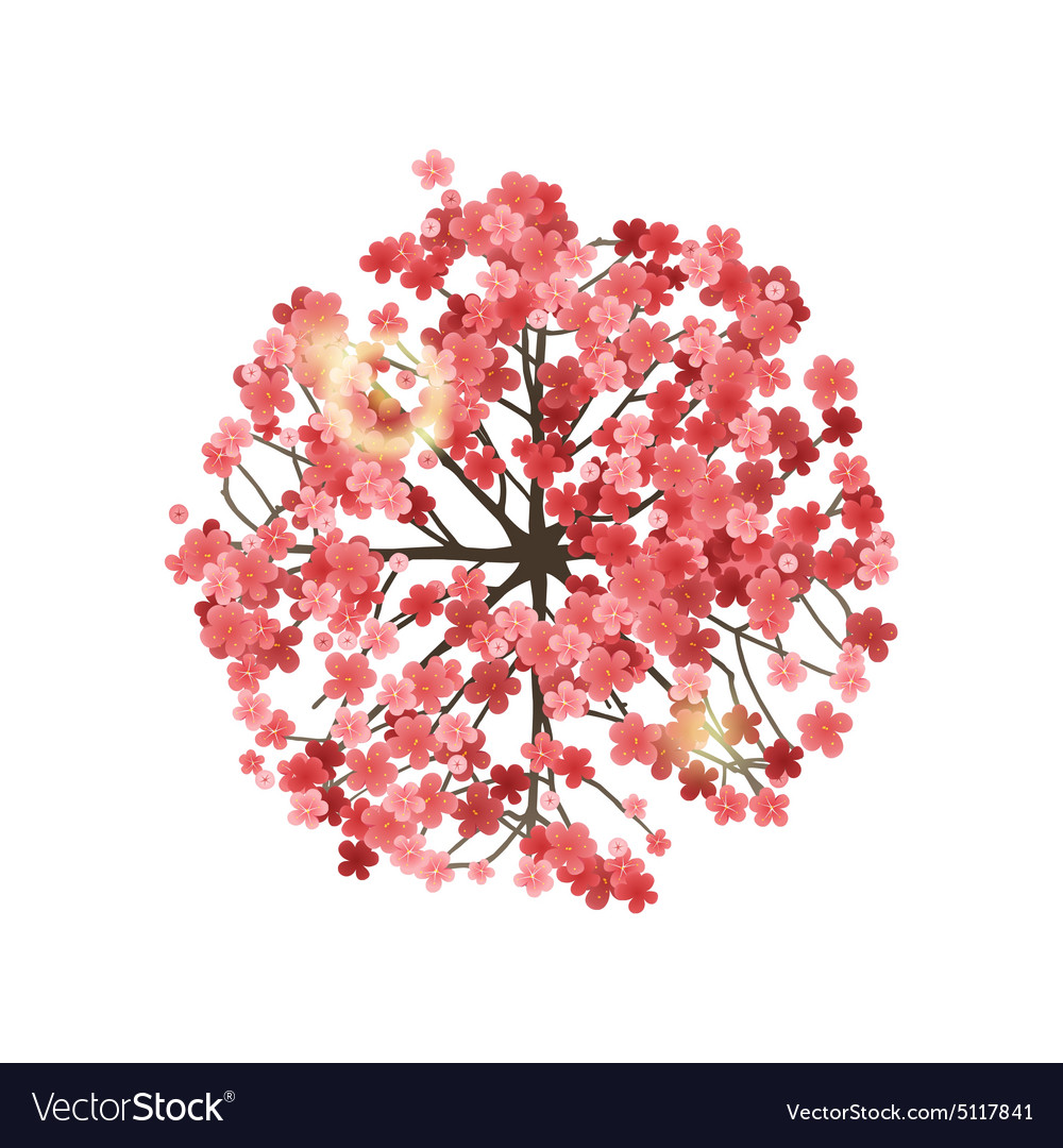 Spring Tree Top View Royalty Free Vector Image