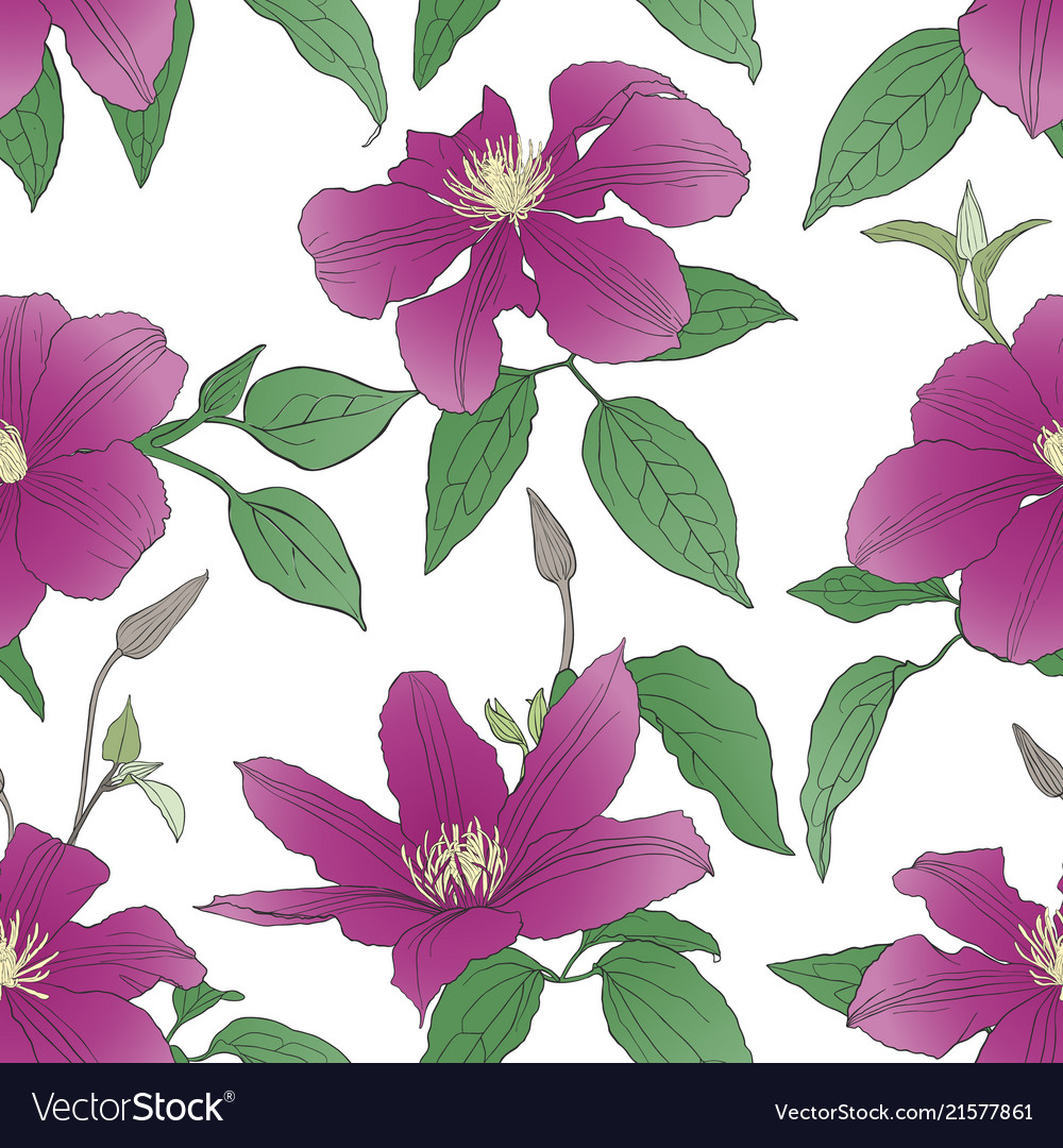 Seamless pattern with clematis flowers
