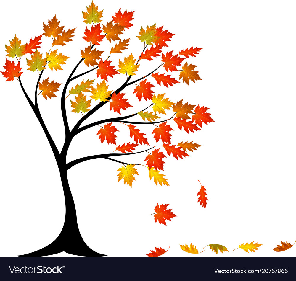 Autumn Tree Cartoon Royalty Free Vector Image Vectorstock