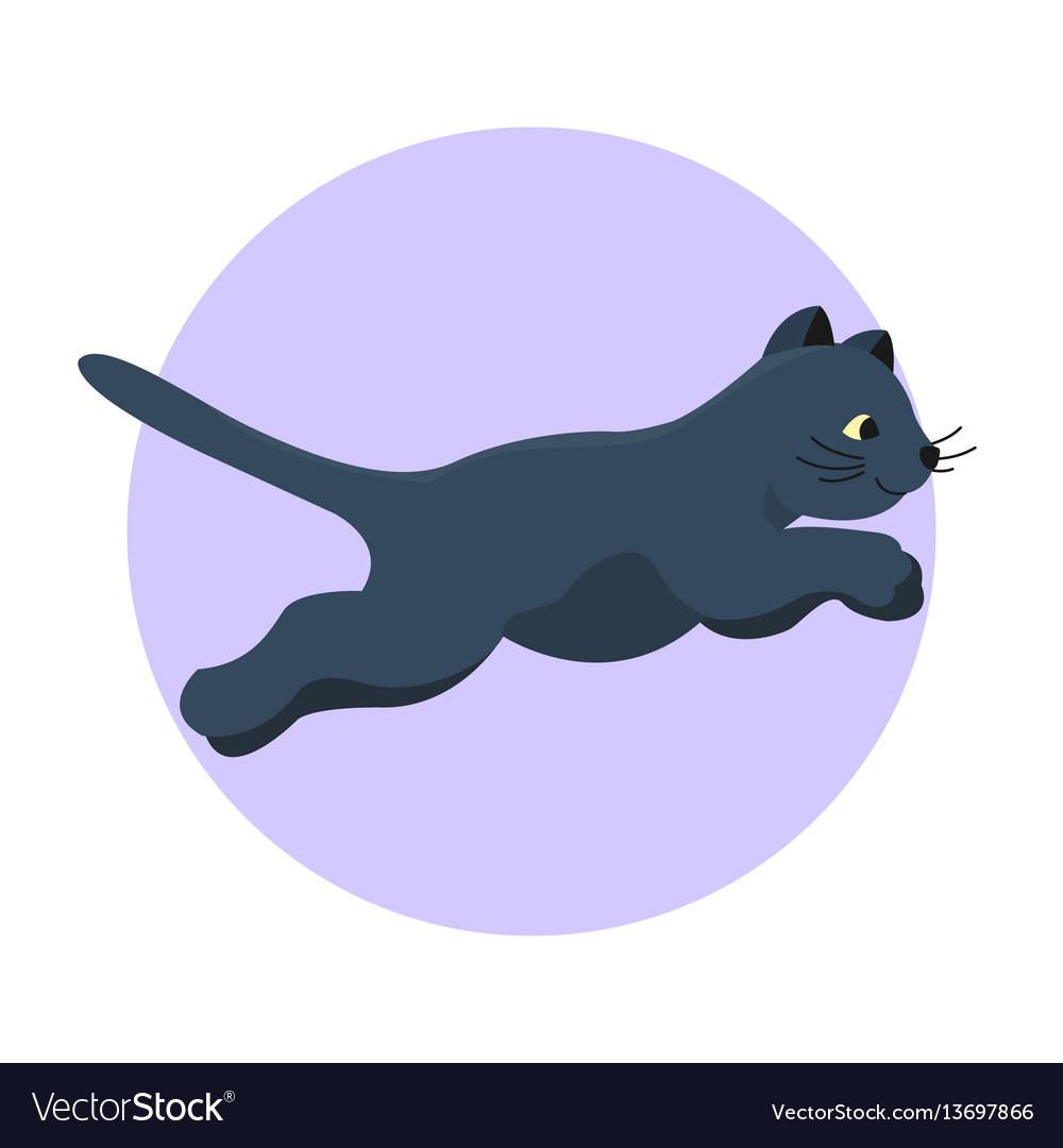 Cat breed cute kitten black pet portrait fluffy