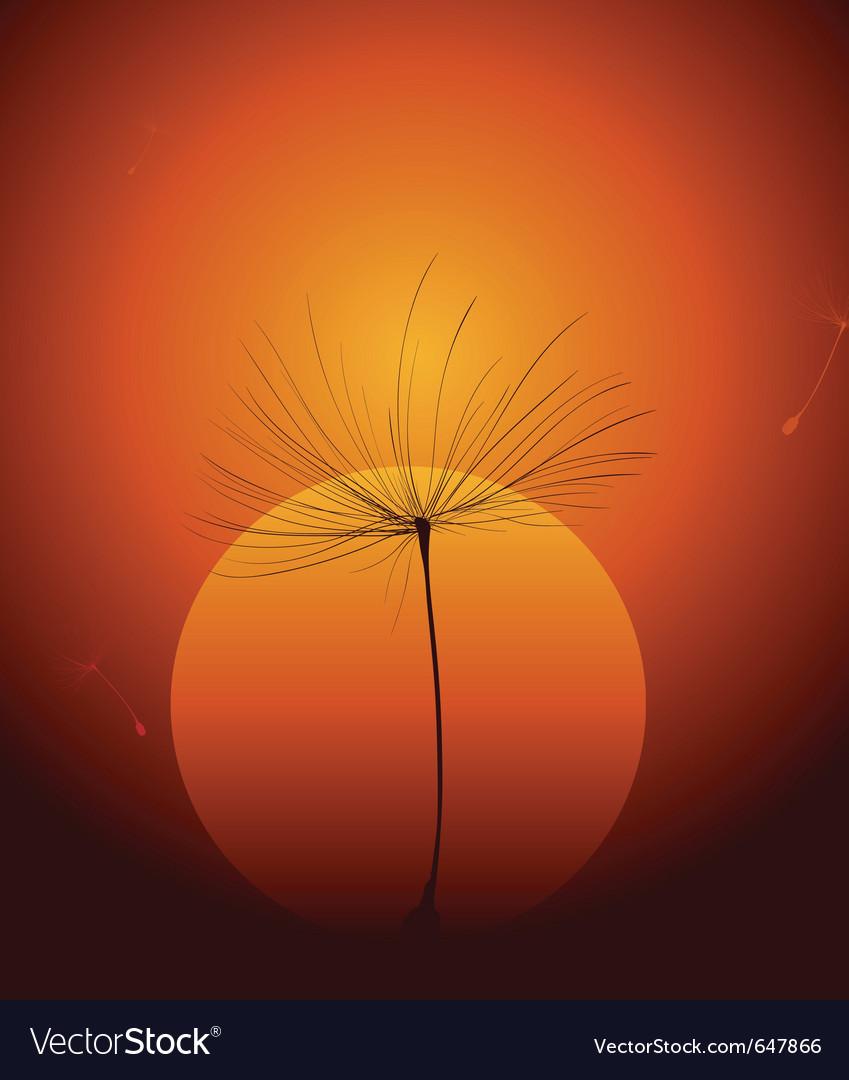 Dandelion seed vector image