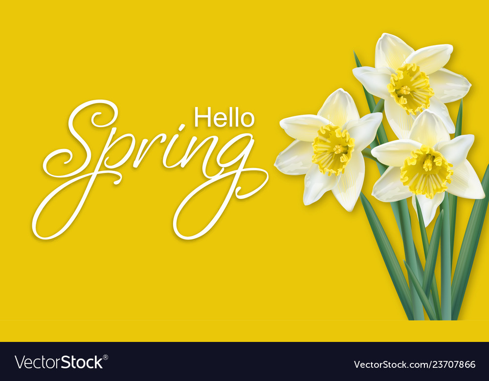 Spring card narcissus flowers bouquet on yellow