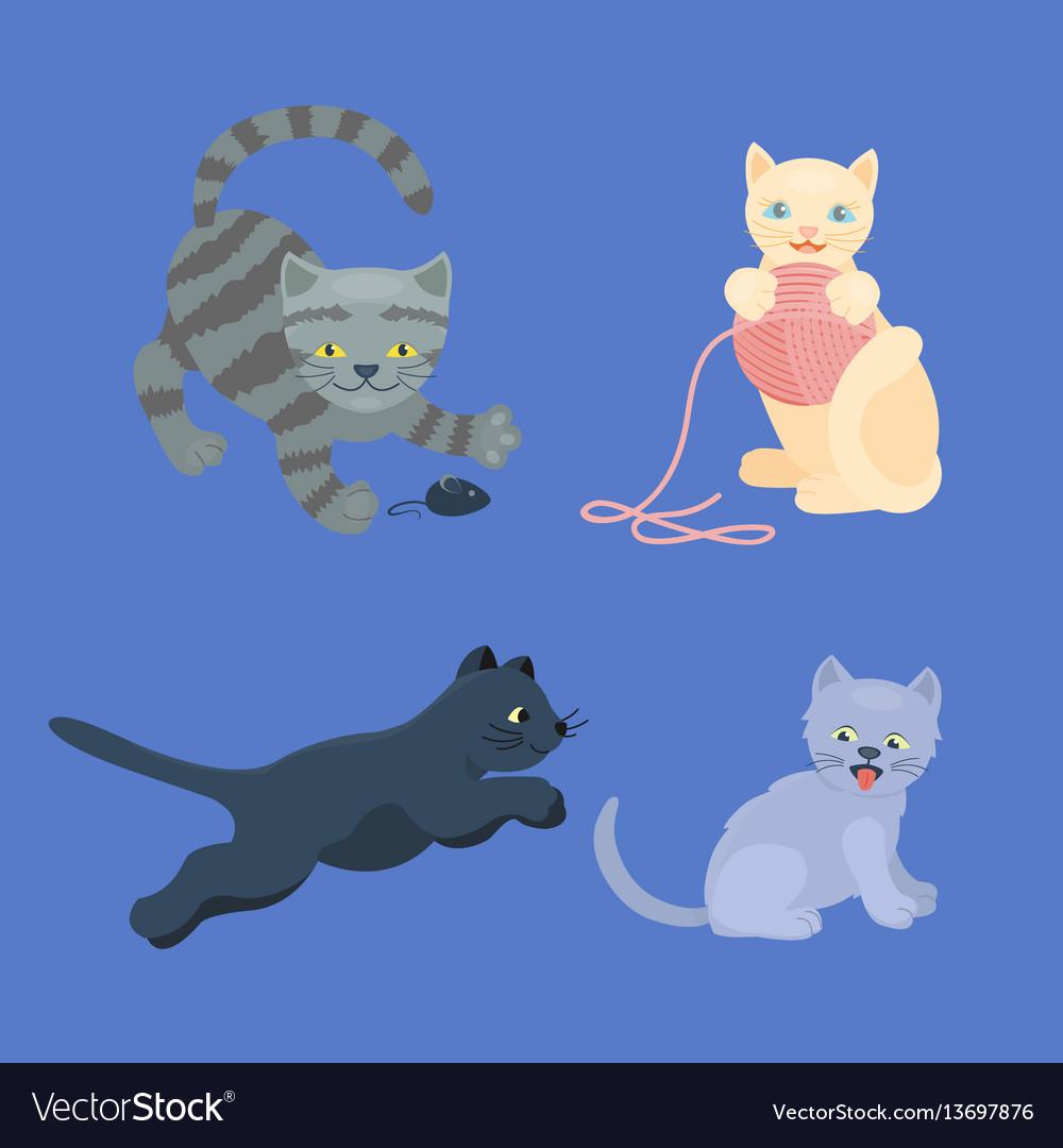 Cat breed cute kitten pet portrait fluffy young