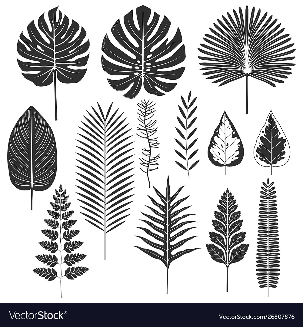 Tropical leaf silhouette set