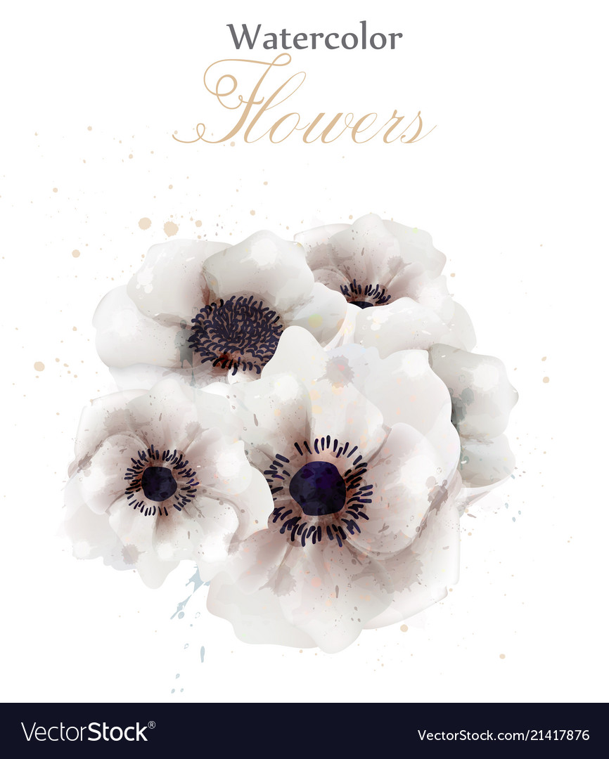 White poppies flowers isolated beautiful