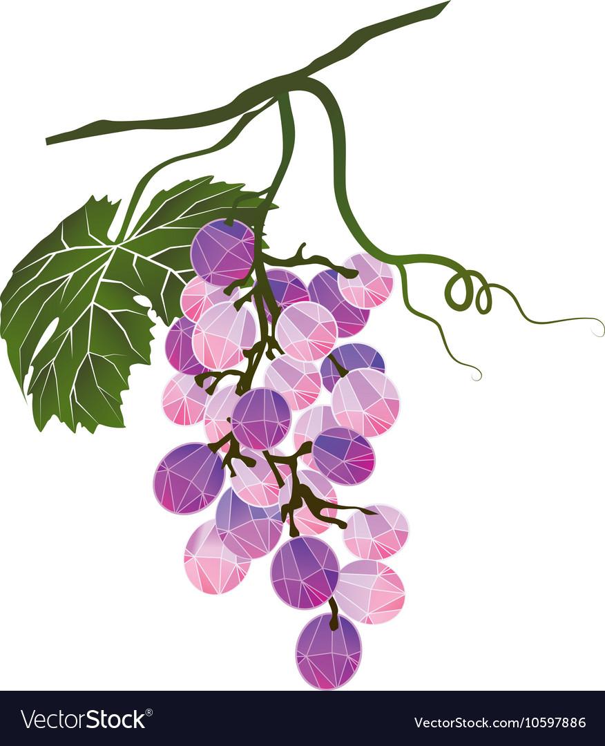 Bunch of grapes stylized polygonal