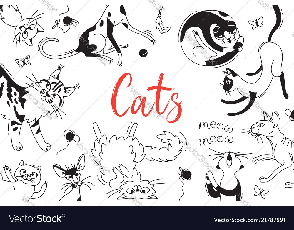 Card with playing cats of different breeds cat in