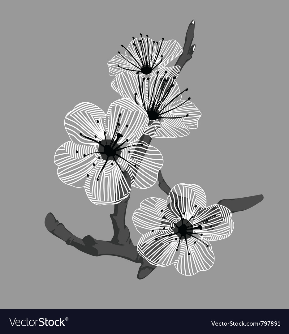 White Orchid Flowers Royalty Free Vector Image