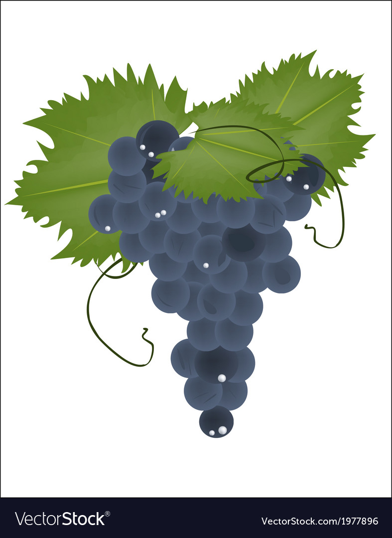 Realistic grapes on a white background