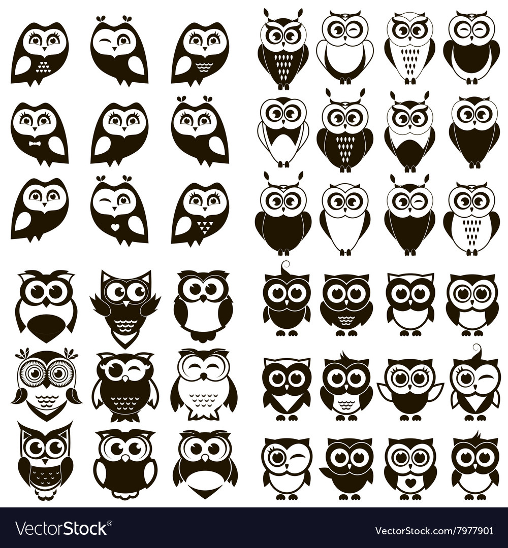 Black and white owl and owlet se