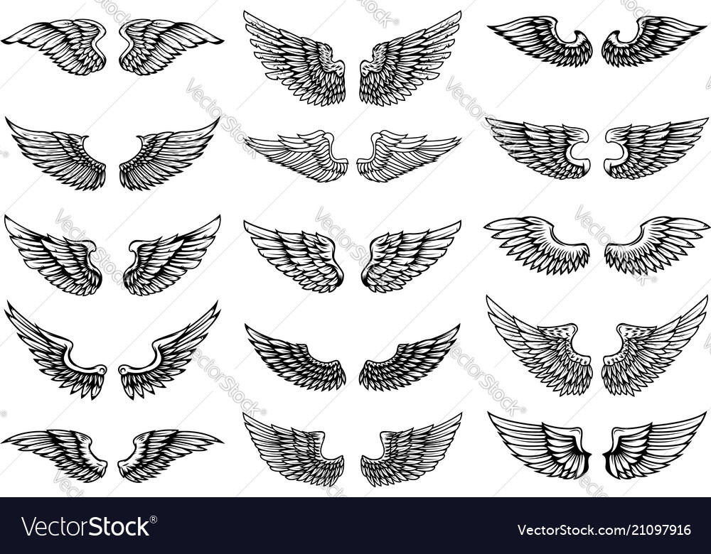 Set bird wings in tattoo style design element