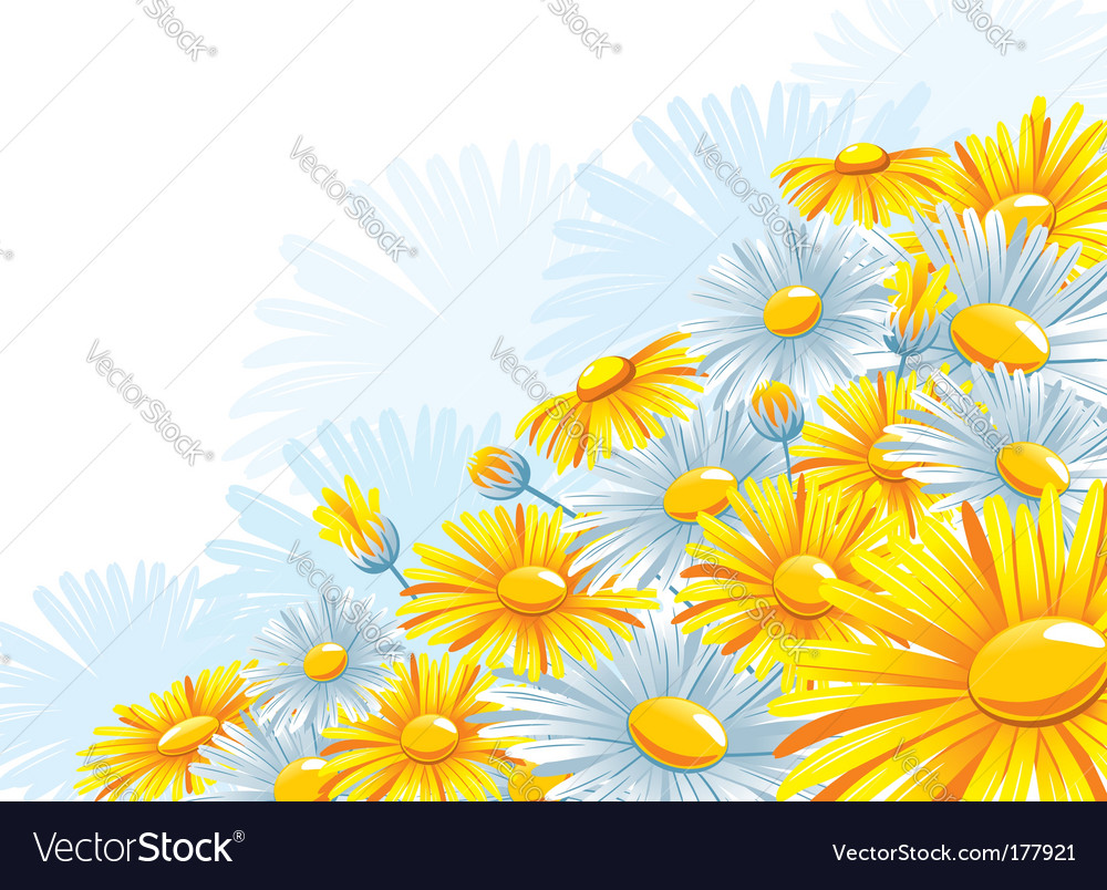 Beautiful background with a chamomile