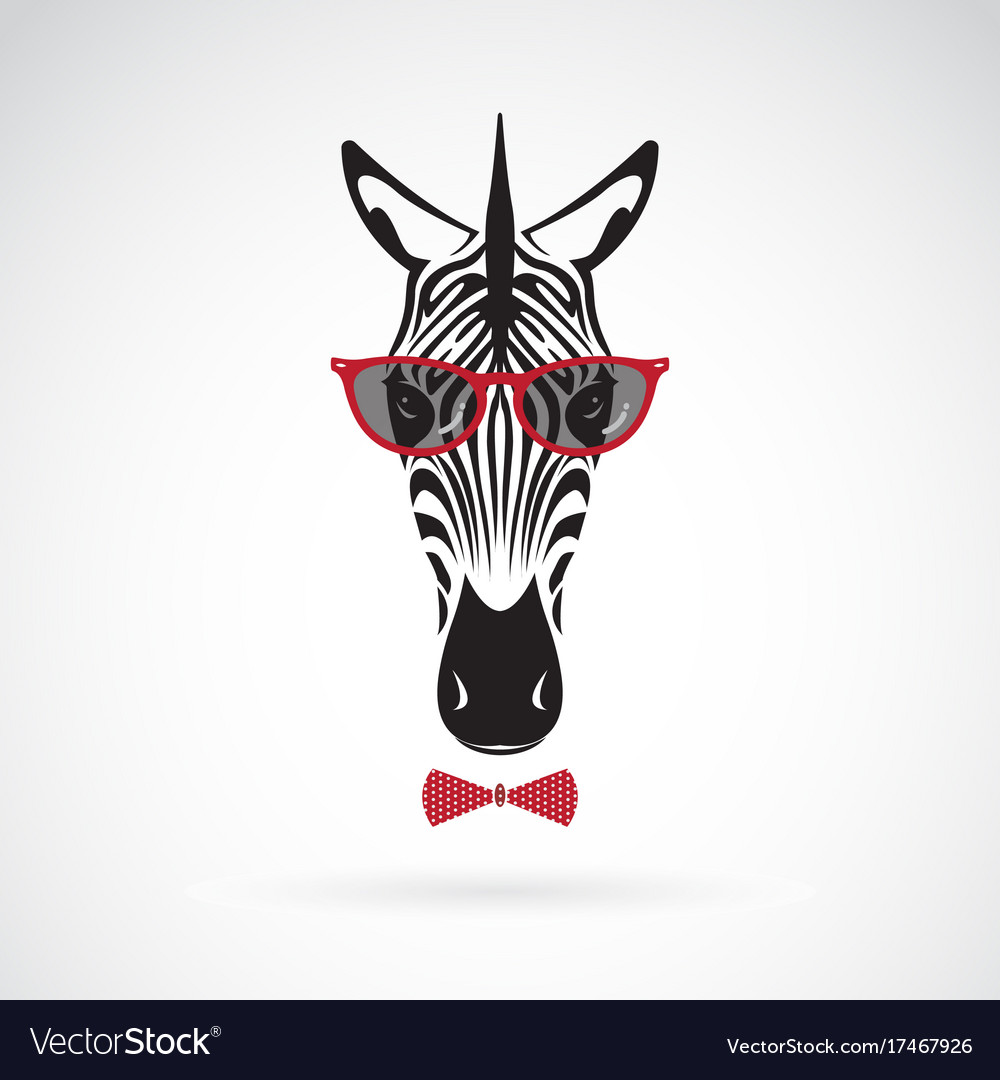 Zebra wearing sunglasses on white background