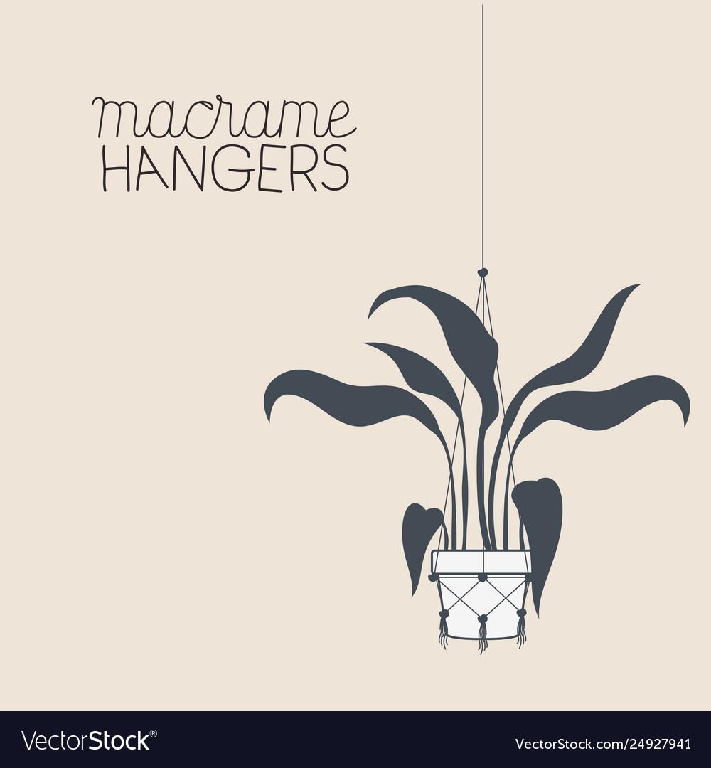 Houseplant in macrame hangers