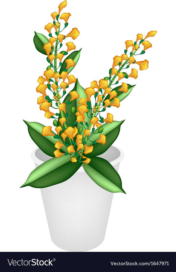 Beautiful yellow padauk flower in a flower pot vector image mightylinksfo