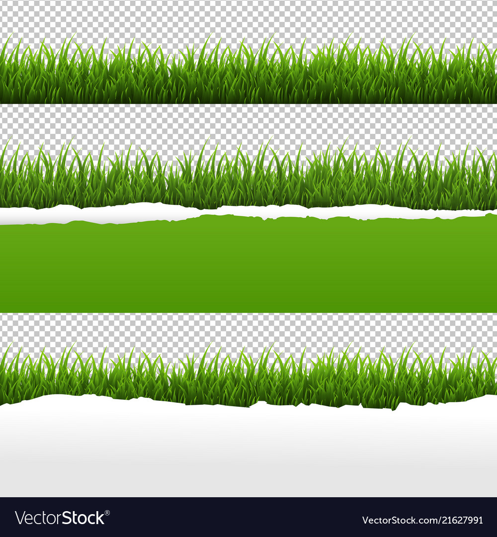 Green grass and ripped paper transparent