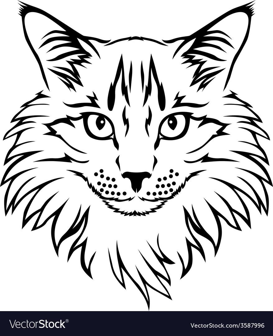 Contour cat