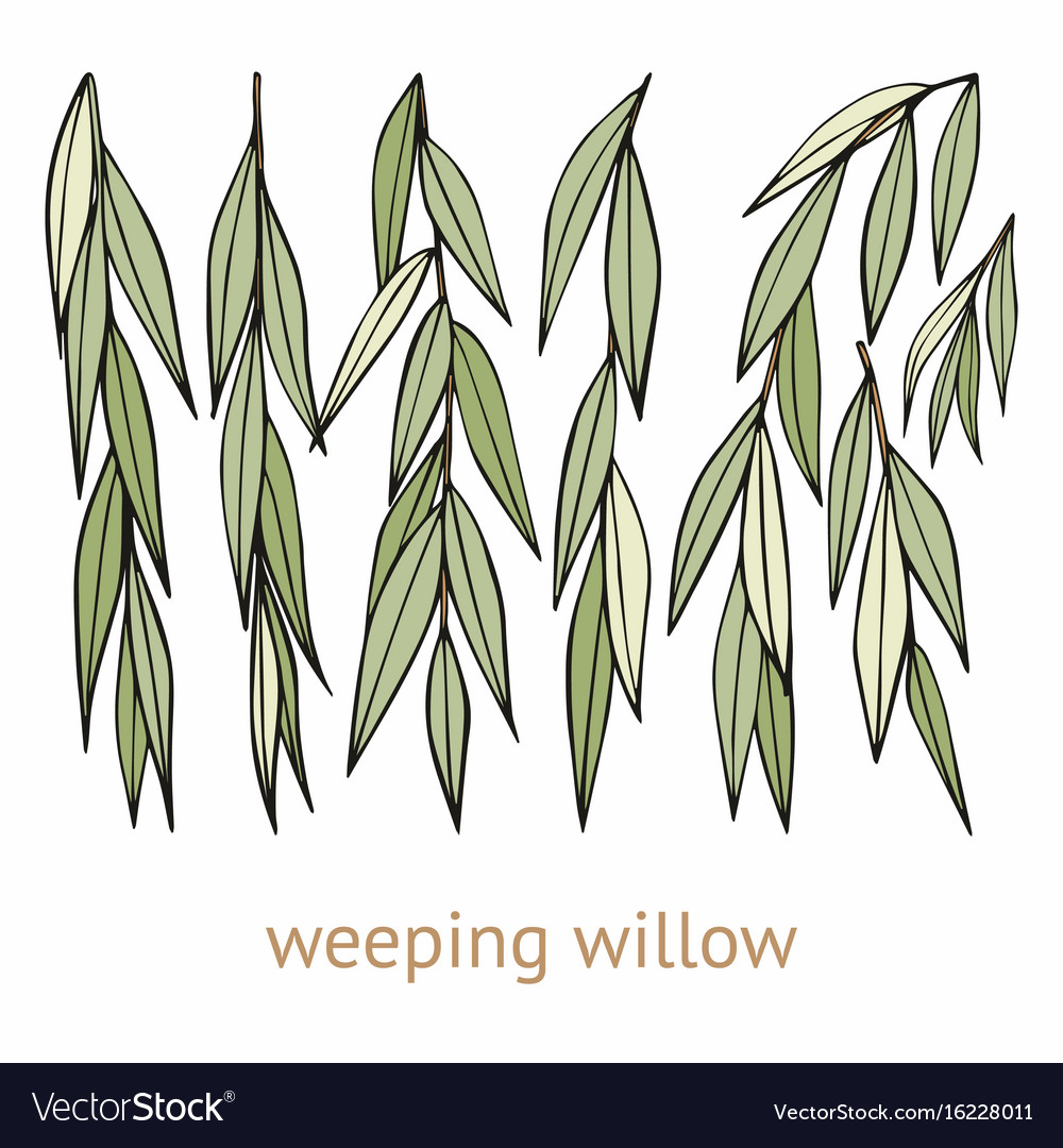 cweeping willow gallery