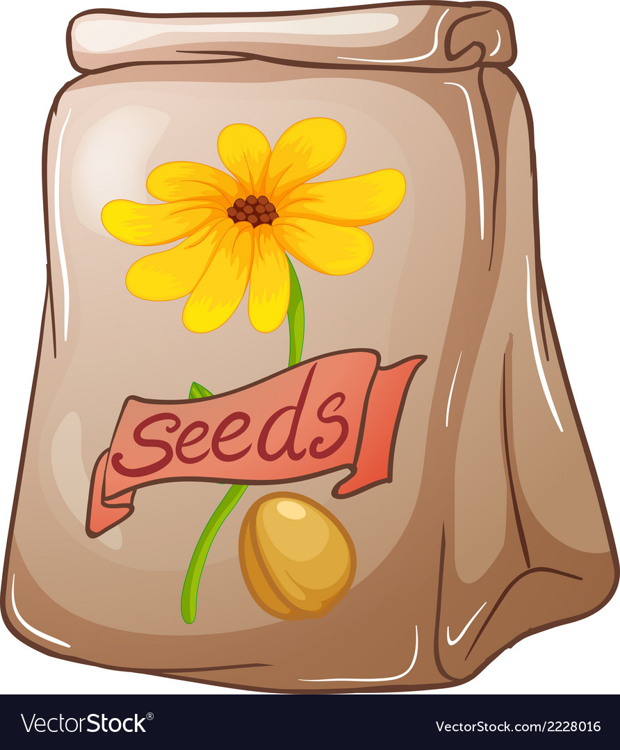 Sunflower Seeds Royalty Free Vector Image