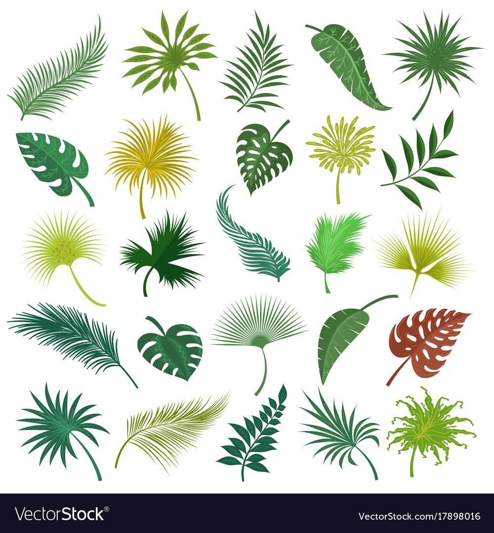 Palm exotic leaves set