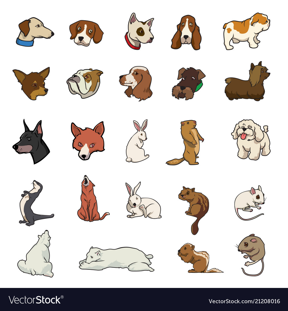 Random animal collection