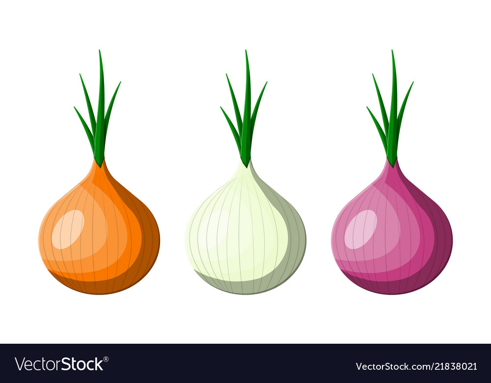 Onion vegetable isolated on white