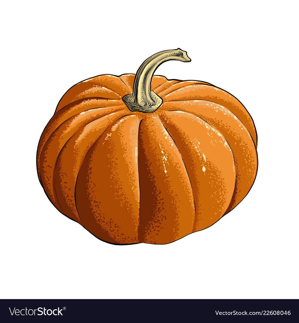 Hand drawn sketch of pumpkin in color isolated on