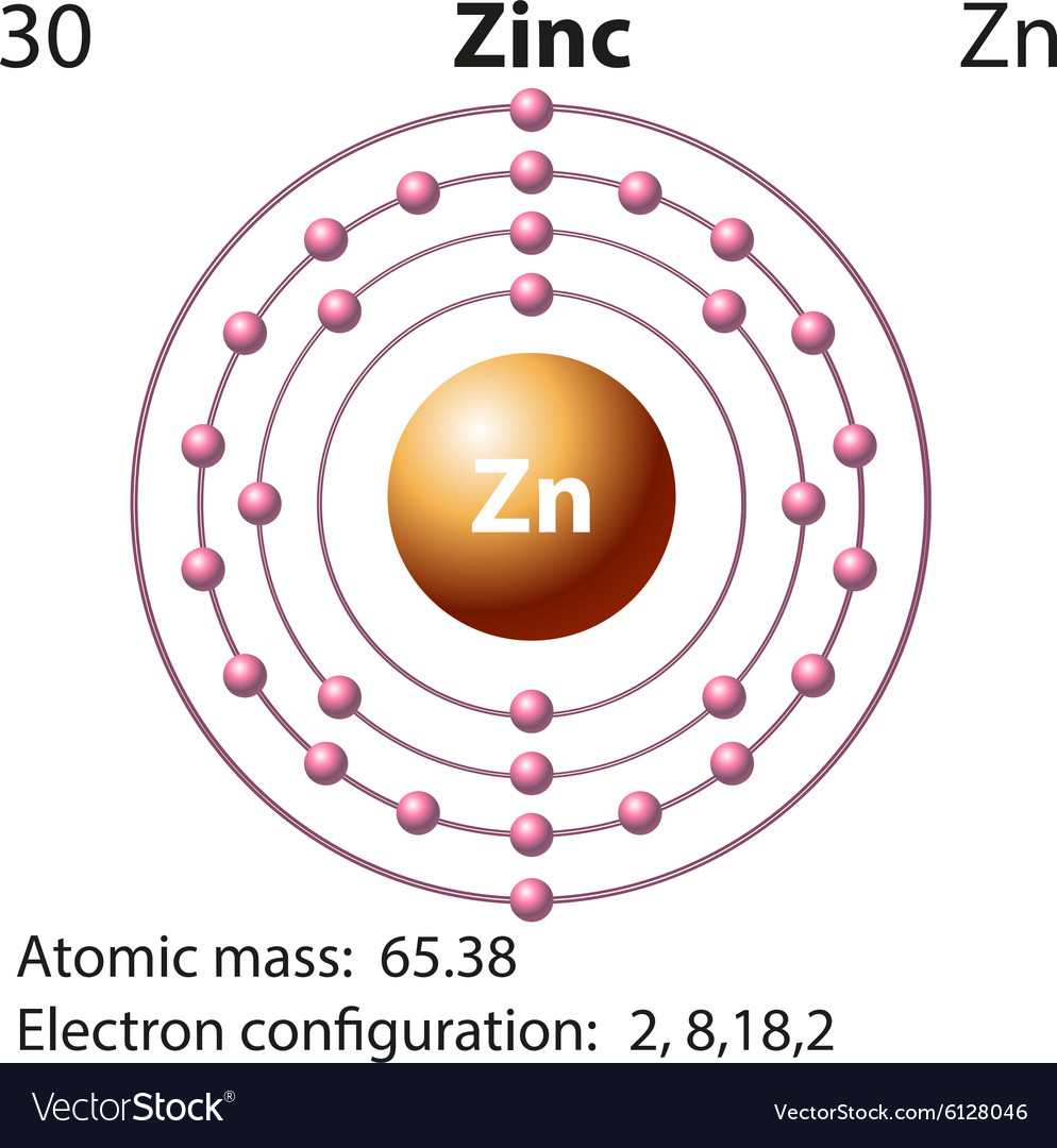 Zinc Electron Diagram Schematics Wiring Diagrams Atoms Configurations Of Elements Symbol And For Royalty Free Vector Rh Vectorstock Com Atom Element Model