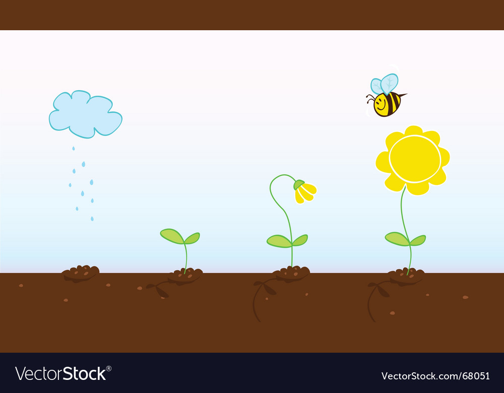 Plant growth process vector image