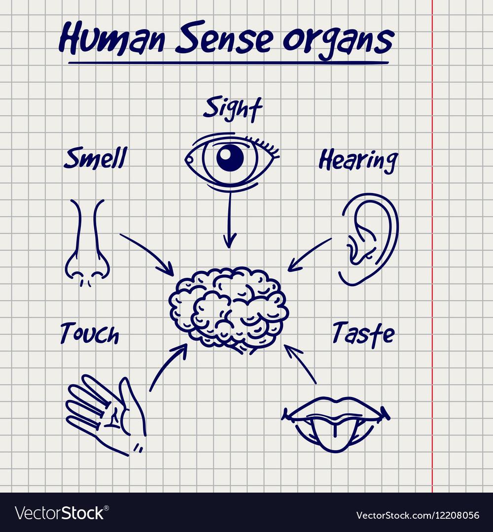 Synopsis of human sense organs sketch Royalty Free Vector