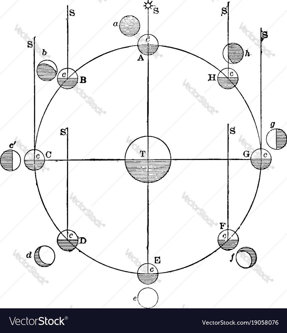 Phases Of Moon Lunar Phase Vintage Royalty Free Vector Image Diagram