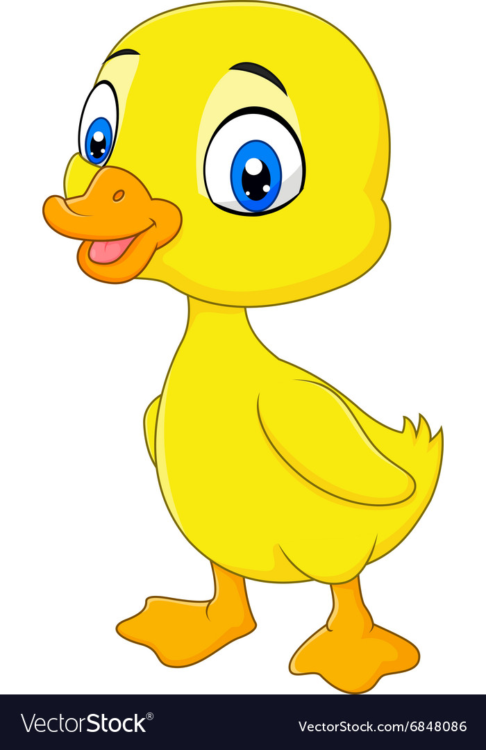 Cute baby duck posing isolated on white background vector image