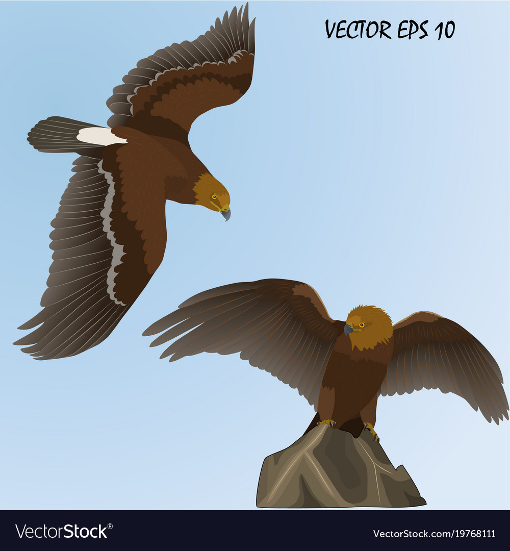 Two realistic golden eagles