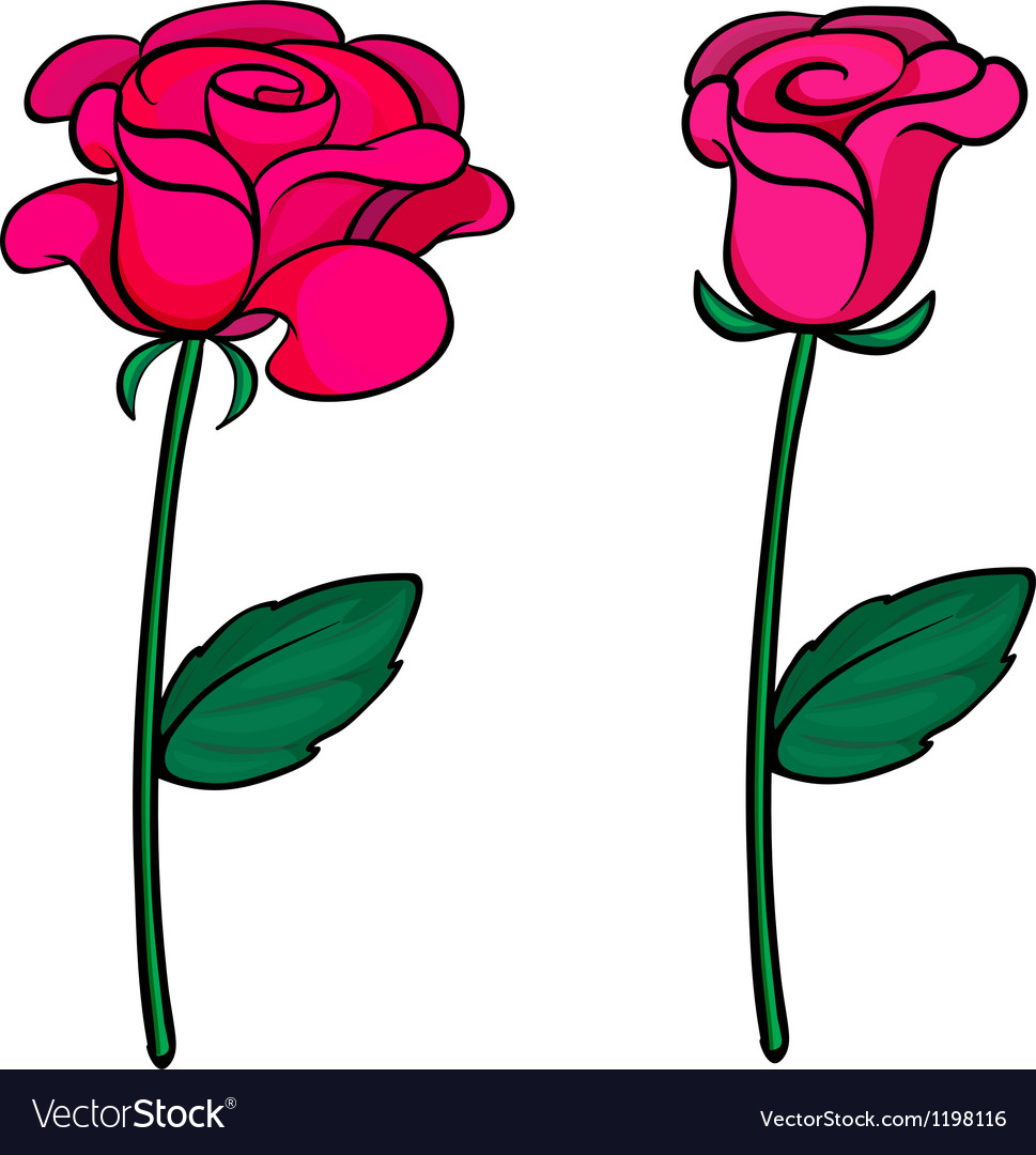Two fresh roses
