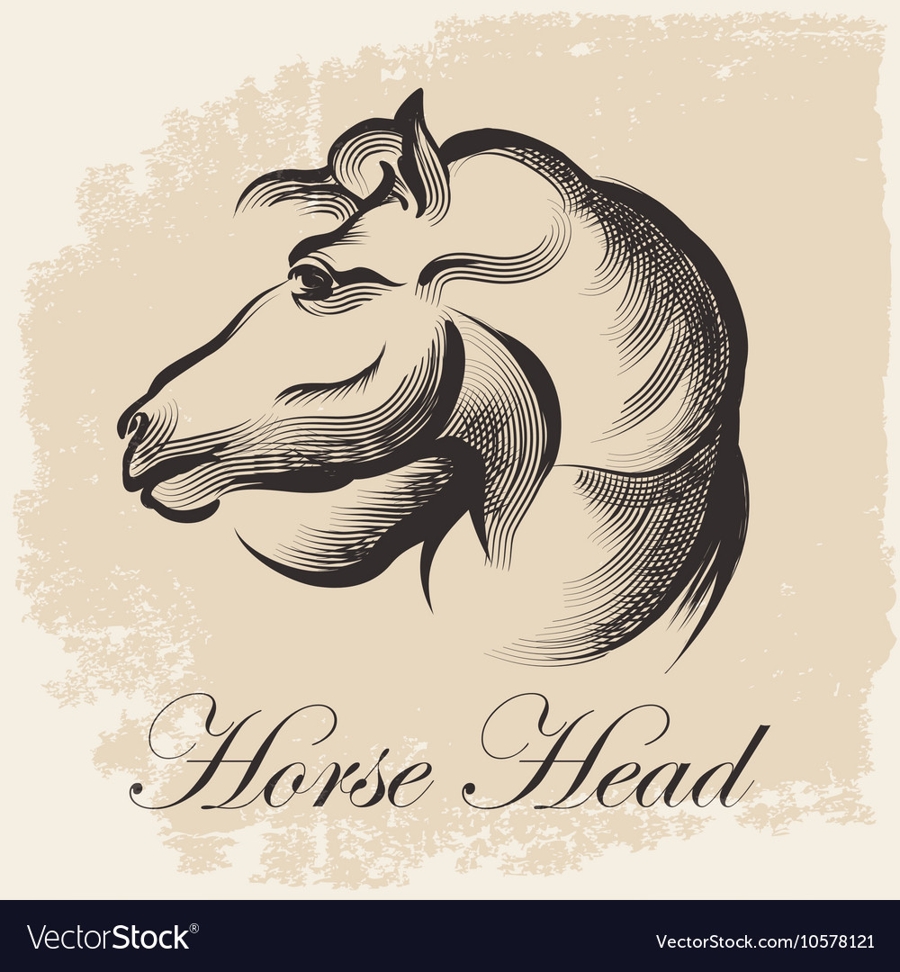 Horse Head Sketch vector image