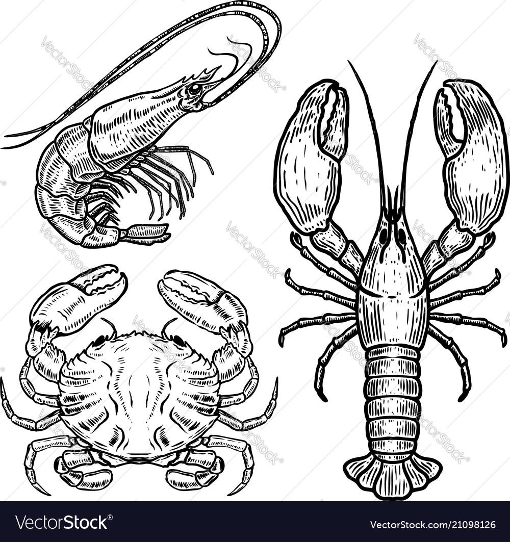 Hand drawn lobster crab shrimp on white