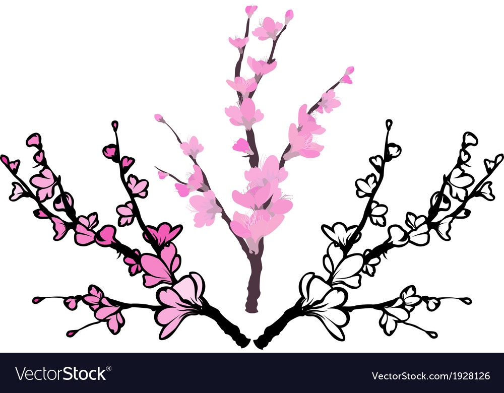 Sakura three variants vector image