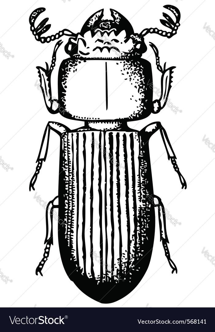 Bessbug vector image