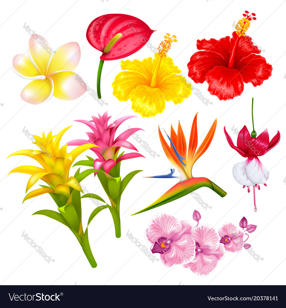 List Of Exotic Flowers With Pictures Flowers Healthy