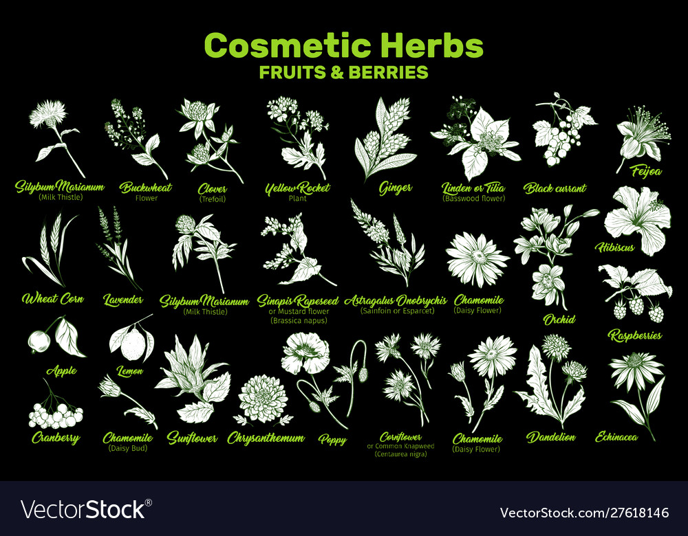 Cosmetic herbs fruits and berries