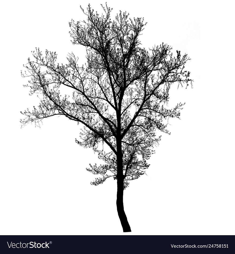 Beautiful tree silhouette icon