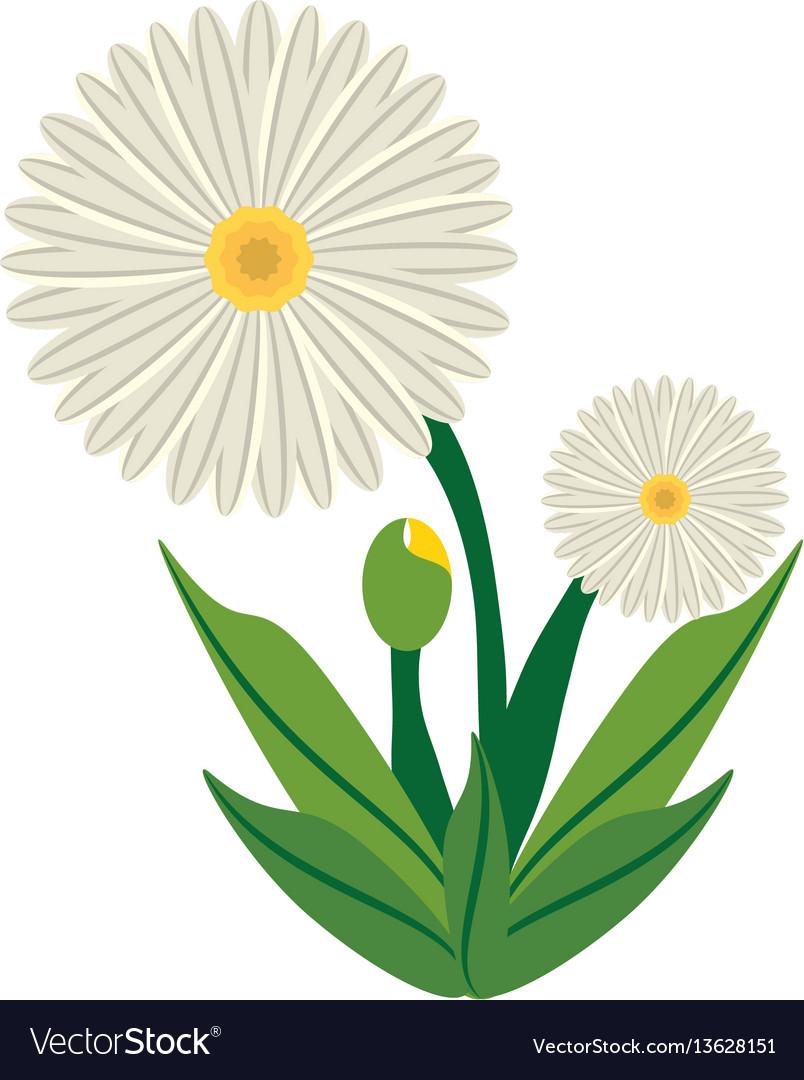Daisy flower image icon