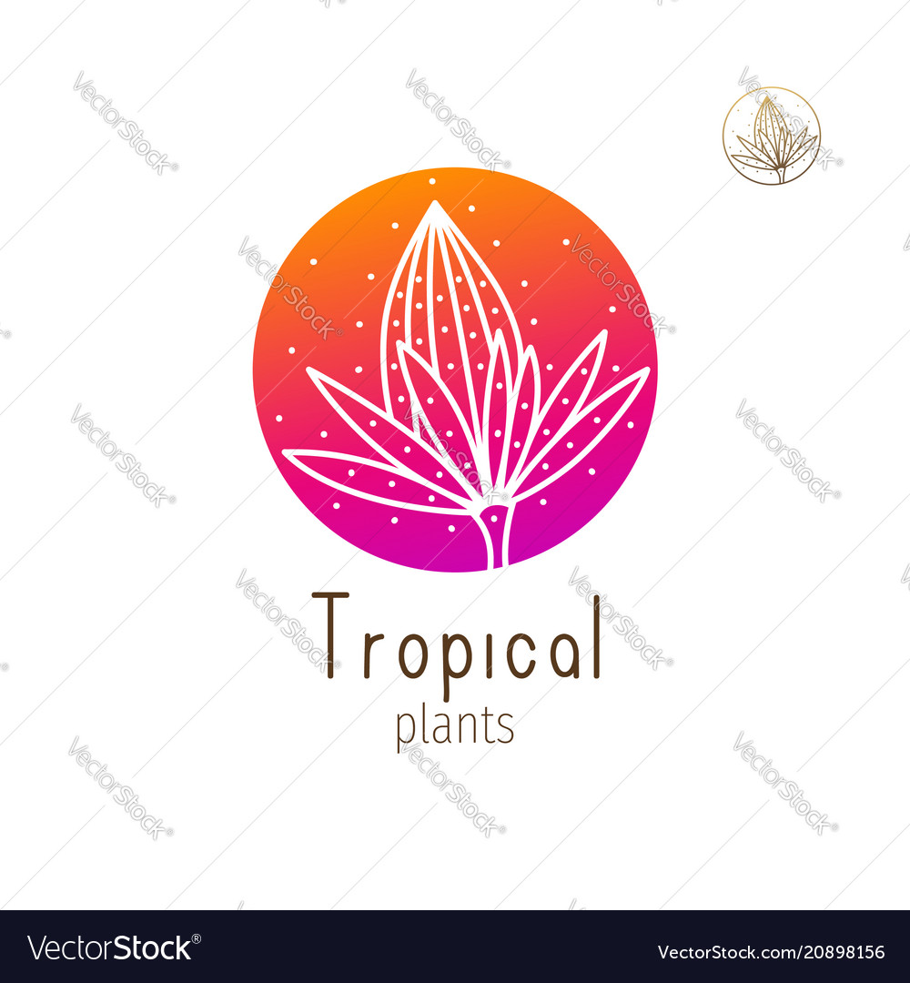 Tropical floral herb