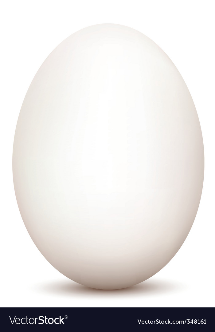 An egg vector image