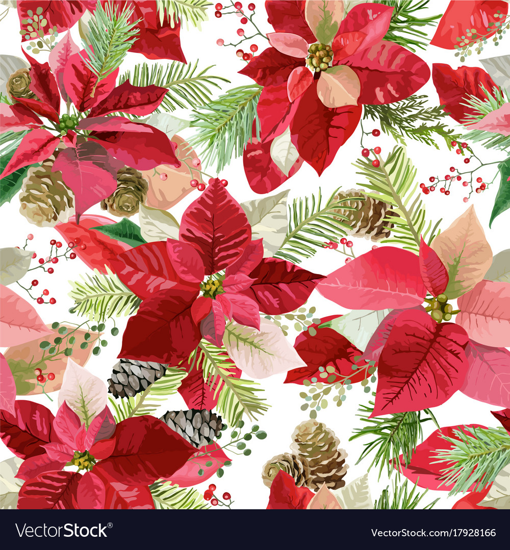 Christmas Flowers.Christmas Poinsettia Flowers Seamless Background