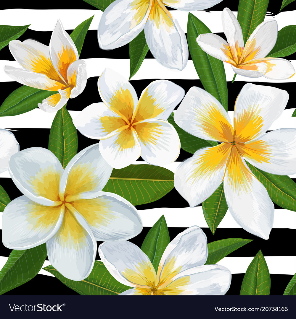Tropical seamless pattern with plumeria flowers