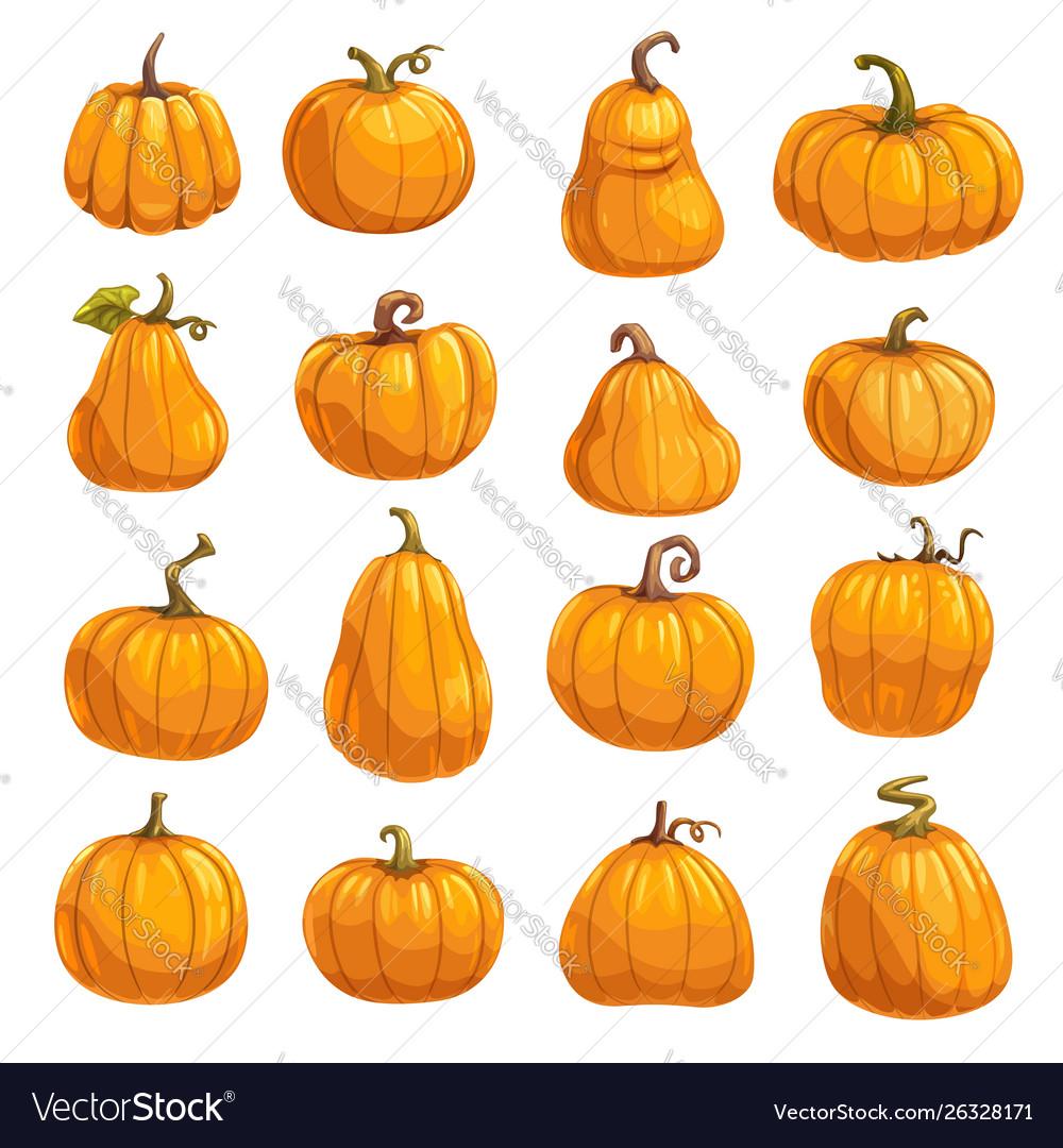 Pumpkin vegetable icons autumn squash or gourd